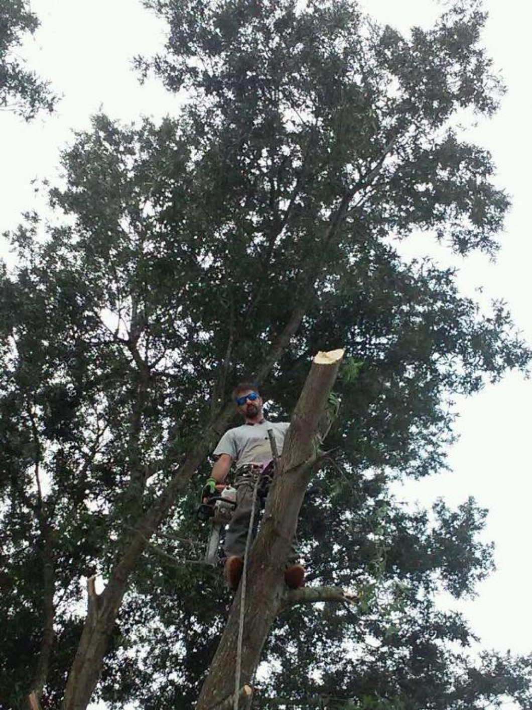 Branch out with Karney's Tree Services
